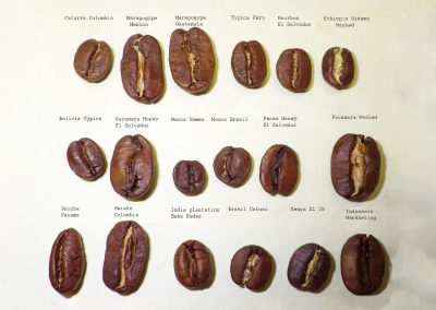 2_differentes_variete_coffea_arabica_laurina_cafe_reunion